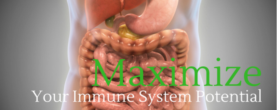Maximize Your Immune System Potential