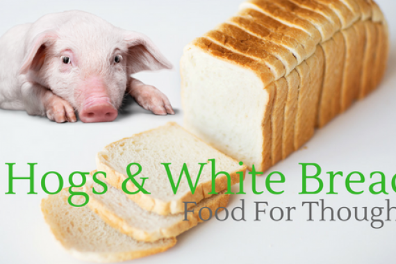 HOGS & WHITE BREAD